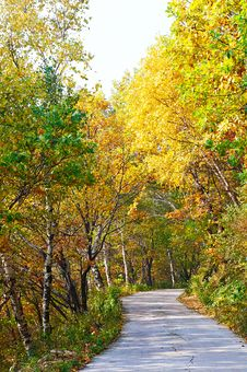 The Quiet Forest _ Autumnal Scenery Stock Image