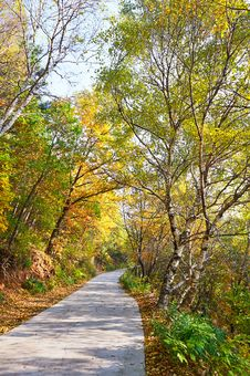 The Quiet Forest Path _ Autumnal Scenery Stock Image