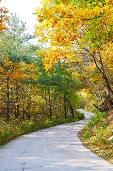 Free In Twists And Turns Path _ Autumnal Scenery Royalty Free Stock Image - 35367006