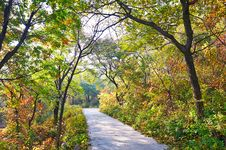 Free The Multicolor Forest Path _ Autumnal Scenery Royalty Free Stock Photography - 35367077
