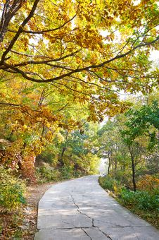 The Quiet Crook Path _ Autumnal Scenery Royalty Free Stock Photography