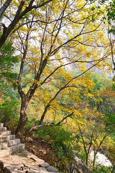 Free The Trees And Stone Step _ Autumnal Scenery Stock Image - 35367441