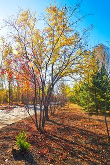 Free The Multicolor Leaves Autumnal Scenery Royalty Free Stock Photography - 35369407