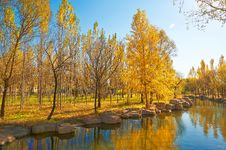 Free The Golden Trees Riverain Autumnal Scenery Stock Photo - 35369560