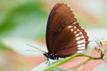 Free Butterfly In National Park  Thailand Stock Photography - 35379702