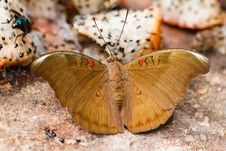 Free Butterfly Stock Image - 35379391