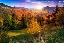 Pine Trees Near Valley In Mountains And Autumn Forest On Hillsid Stock Images