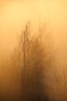 Trees In The Morning Fog Royalty Free Stock Image