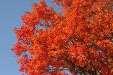 Free Tree Stock Image - 35391981