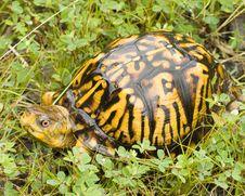 Free Turtle Stock Image - 35392551