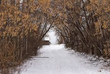 Free A Tree Lined Driveway In Winter Royalty Free Stock Photography - 35396197