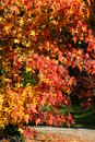 Free Red Autumn Leaves Royalty Free Stock Image - 3542006