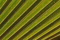 Free Palm Background Stock Photo - 3542810