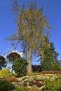 Free Autumn Heather Garden Royalty Free Stock Images - 3544049