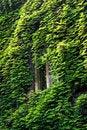 Free Window In Green Stock Photo - 3546980