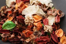 Free Dry Flower Petals Royalty Free Stock Images - 3540709