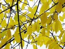 Free Branches Witch Autumn Leaves Stock Photos - 3541123