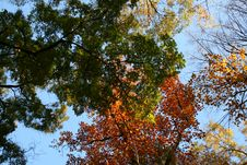 Free Red And Green Autumn Leaves Royalty Free Stock Photos - 3542108