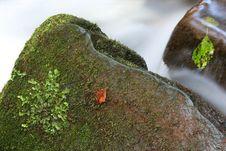 Free Mossy Stone Royalty Free Stock Photo - 3542385