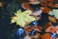 Free Leaves On Water Stock Photos - 3542423