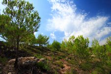 Free Pine Trees Landscape And Blue Sky Stock Images - 3542944