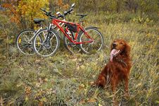 Dog And Bikes Stock Images