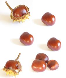 Free Chestnuts Royalty Free Stock Photos - 3543928