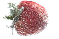 Free Strawberry Stock Photos - 3543993