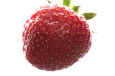 Free Strawberry Stock Photography - 3544012