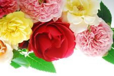 Free Roses Stock Photography - 3544072