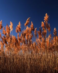 Free Grass Royalty Free Stock Photography - 3544637