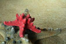 Free Starfish Royalty Free Stock Photo - 3544855