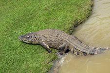 Free Crocodile Stock Images - 3545754