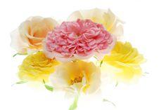 Free Pink Rose Stock Images - 3546054
