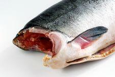 Free Fish Royalty Free Stock Image - 3546116