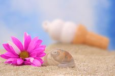 Free Sea Shell And Flower Royalty Free Stock Image - 3546716