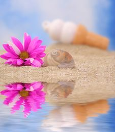 Sea Shell And Flower Stock Image