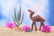 Free Aloe And Camel Royalty Free Stock Image - 3546786