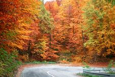 Free Colors Of Autumn Stock Images - 3546974