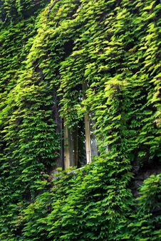 Free Window In Green Stock Photo - 3546980