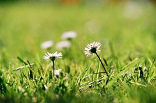 Free Flowers With Grass Stock Photography - 3547202