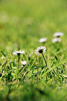 Free Flowers With Grass Stock Photo - 3547230