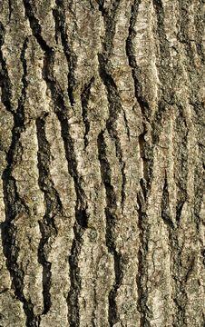 Free Tree Bark Detail Stock Images - 3547574