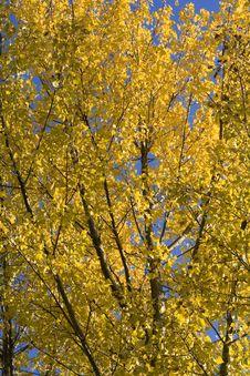 Free Tree Top Detail Stock Photo - 3547580