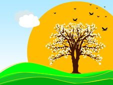 Free Spring Tree Stock Images - 3547644