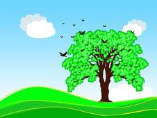 Free Spring Tree Stock Image - 3547651