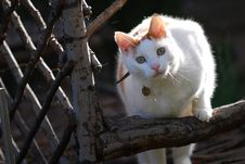 Free Trellis Cat Royalty Free Stock Image - 3549016