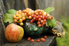 Free Apple, Mug And Viburnum Stock Images - 3549164