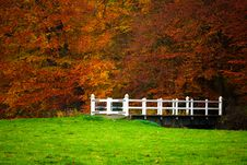 Free Autumn In The Forest Royalty Free Stock Photos - 3549578