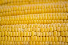 Free Corn Royalty Free Stock Images - 3549879
